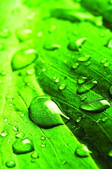 Leaf_with_Rain_Droplets.jpg