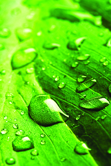 Leaf_with_Rain_Droplets.jpg